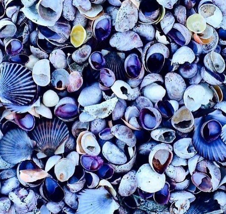 Fifty shades of shells