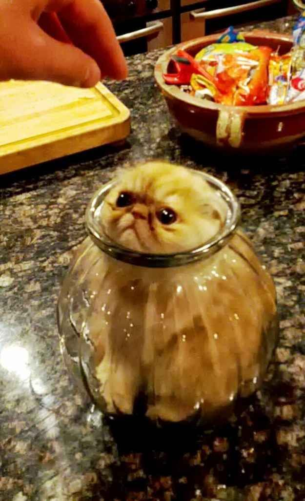 This cat who thought the glass jar was a good place to hide: