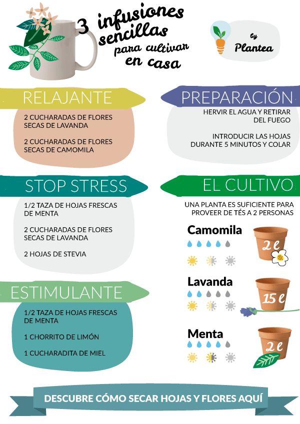 3 infusiones sencillas para cultivar en casa. #DIY, #Huerto, #salud