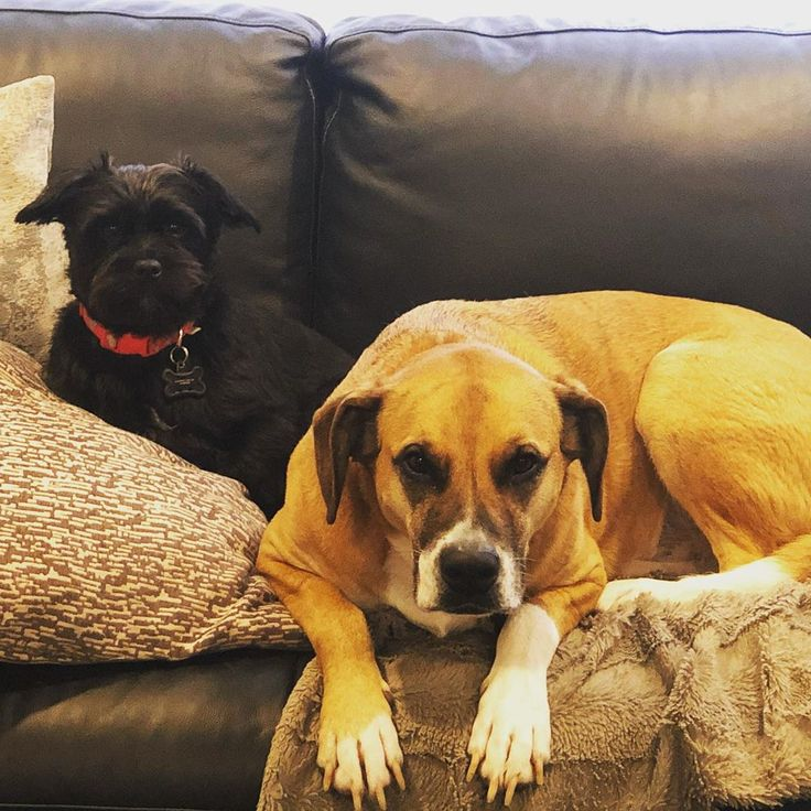 Mean Muggin Dontmesswithus Thuglife Thethuglifeisthelifeforme Couchpotato Dog Dogsofinstagram Cute Cutedogs Sleepy Adopt Cute Dogs Dogs Rescue Dogs