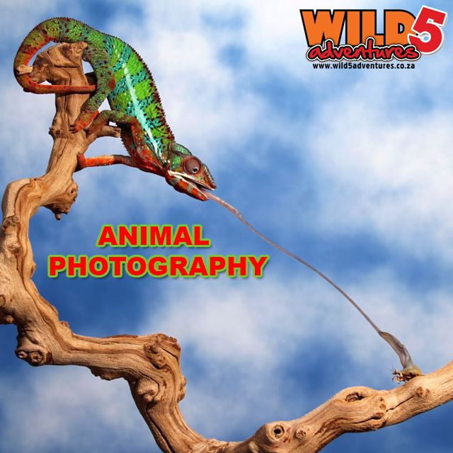 10 tips to Perfect animal photography: Know your subject #Photography #Wildlifephotography http://bit.ly/1KKCf7v
