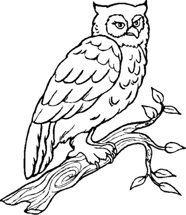 Owl Coloring Pages Owls Are A Group Of Birds That Belong To The Order Strigiformes Constituting 200 Extant Bird Prey Species