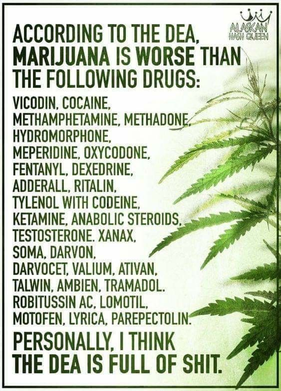 Pin by Mkdreads on MARIJUANA | Cannabis, Medical cannabis