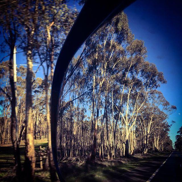 #roadtrip #landscape #fineart #gumtrees