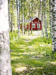 Doesn't get more Swedish than the red wooden house in the wood, surrounded by birches