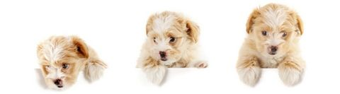 How to Find the Best Puppy Foods