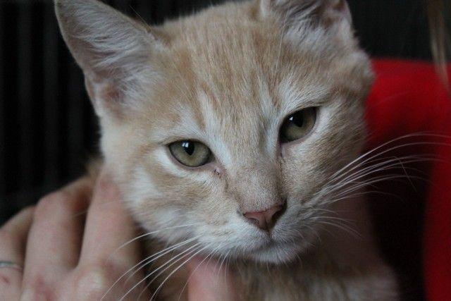 """Gigio the cat, looking for a good home. He has a stump of a tail (but that's okay: they say """"short"""" is in this year!) / Gigio il gatto cerca casa! Ha una coda mozzata, ma non e' un problema (del resto, il corto e' di moda quest'anno). ;)"""