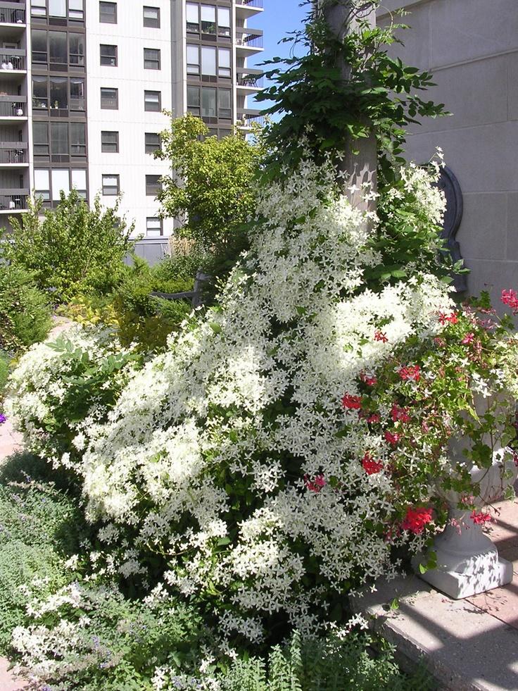 17 best images about topiarius fine gardening on pinterest for Urban garden design