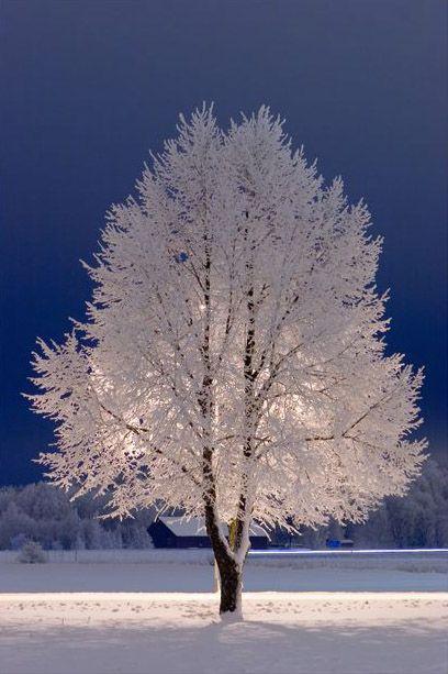 Snow Tree, Stockholm
