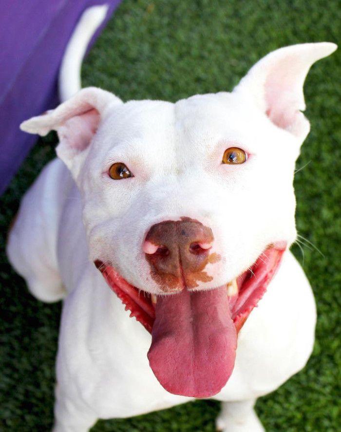 I negozi di animali a Phoenix possono vendere solo cani abbandonati