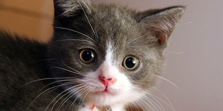 γάτα - Αναζήτηση Google