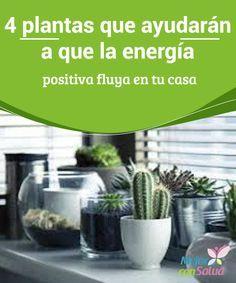 4 plantas que ayudarán a que la energía positiva fluya en tu casa  El azar es ineludible, pero siempre puedes hacer algo para mejorar tu vida. Te recomendamos que recurras a una serie de plantas que ayudarán a que la energía positiva fluya en tu casa