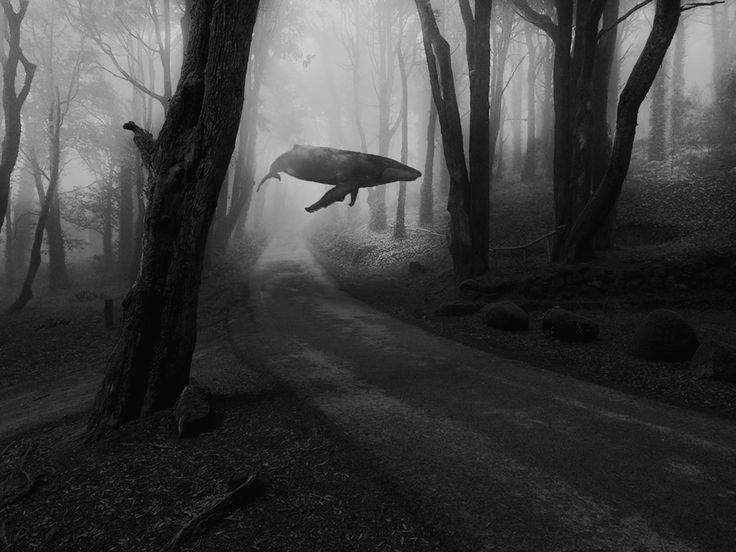 Mithil Thaker - Si les baleines volaient