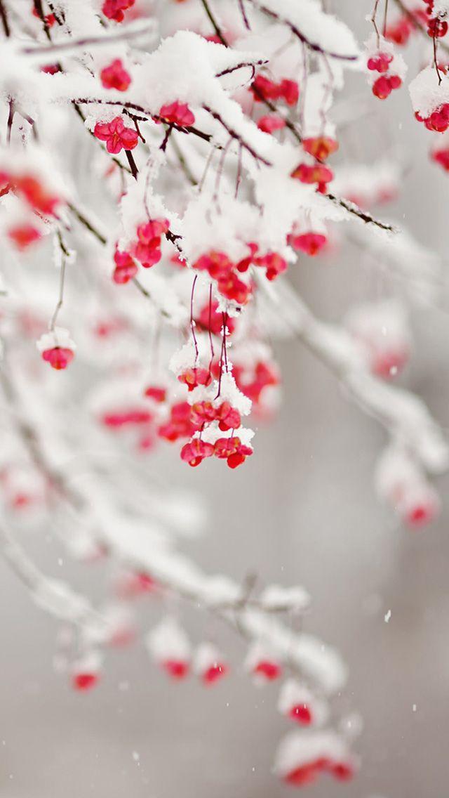 Winter Fruit iPhone Wallpaper | スマホ壁紙/iPhone待受画像ギャラリー