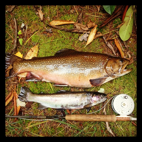 17 best images about brook trout on pinterest mouths for Best trout fishing in pa
