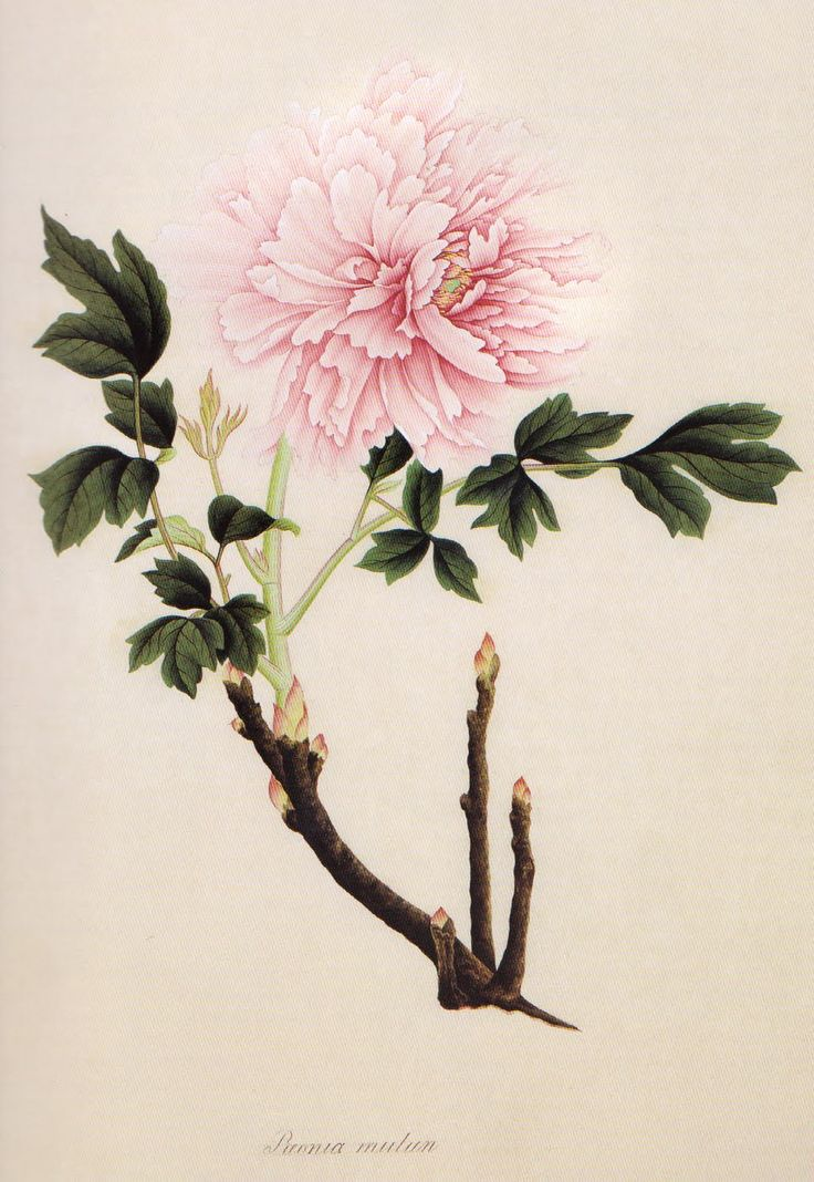 839 best images about vintage flora pd on pinterest for Botanical tattoo london