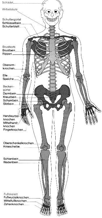 101 besten Skeletal System Bilder auf Pinterest
