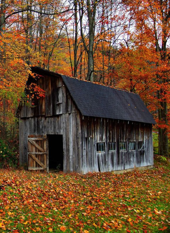 Ooh, I love the fall colors and the fallen leaves. I would love it if I was exploring and came upon a clearing like this with this little barn.