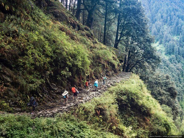 Индия. «Неизвестные Гималаи». Тропа через лес Гунда и Дхарот.