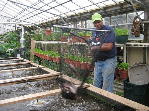 how to start tilapia fish farming
