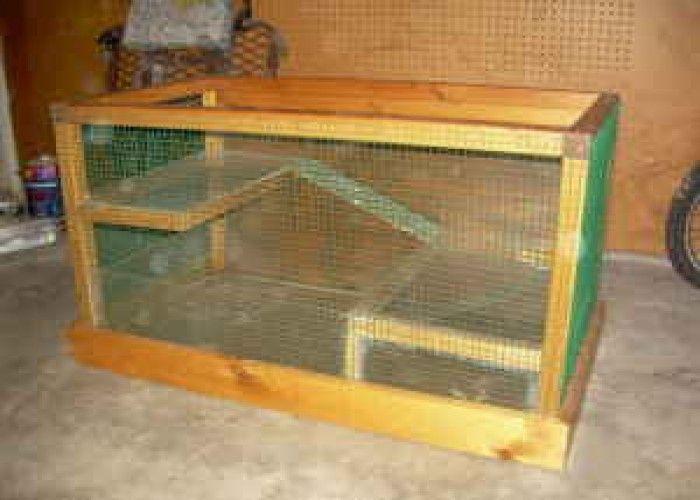 Pinterest for Homemade guinea pig