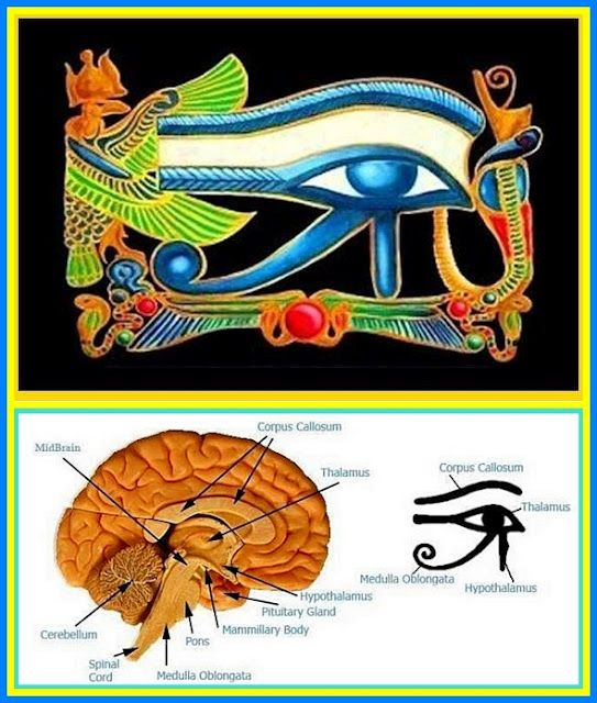 Pineal Gland = Egyptian Eye of Horus hint hint