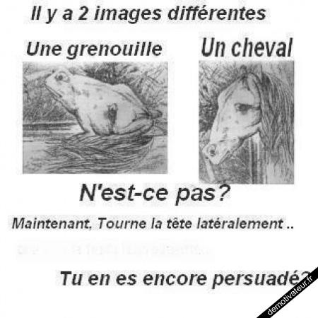 image drole - Illusion d
