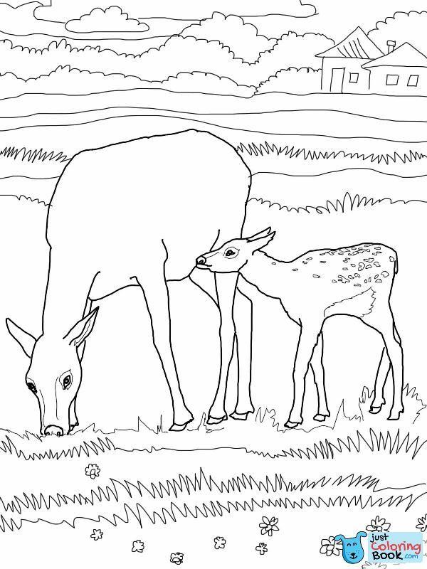 Free Animal Coloring Pages - Elk thru Mouse: (mit Bildern ... | 800x600