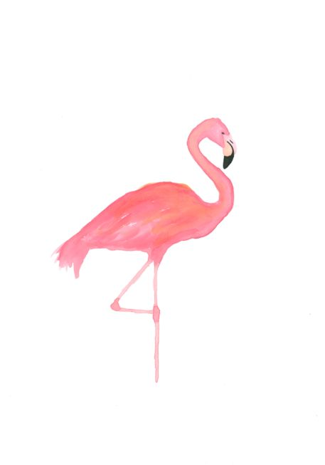 Adrianne.: NEW FLAMINGO ILLUSTRATION
