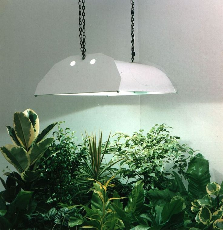 10 Best Images About Indoor Greenhouse Led Lights On