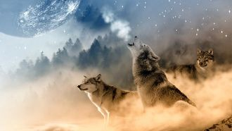 три волка, зима, луна, вой, звезды
