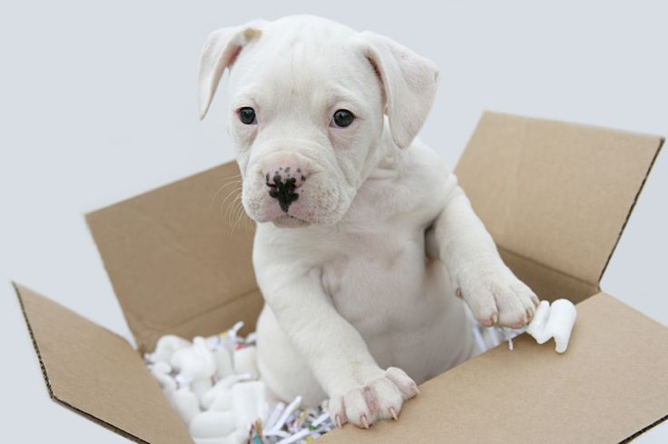 Airvets is a #pet #relocation #company which can help you in #shipping your #pets.