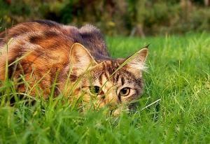 MundoGatos.com es el portal líder sobre el mundo de los gatos. Encontrarás toda la información sobre los gatos, sus cuidados, las distintas razas y toda una comunidad de amantes de los gatos.