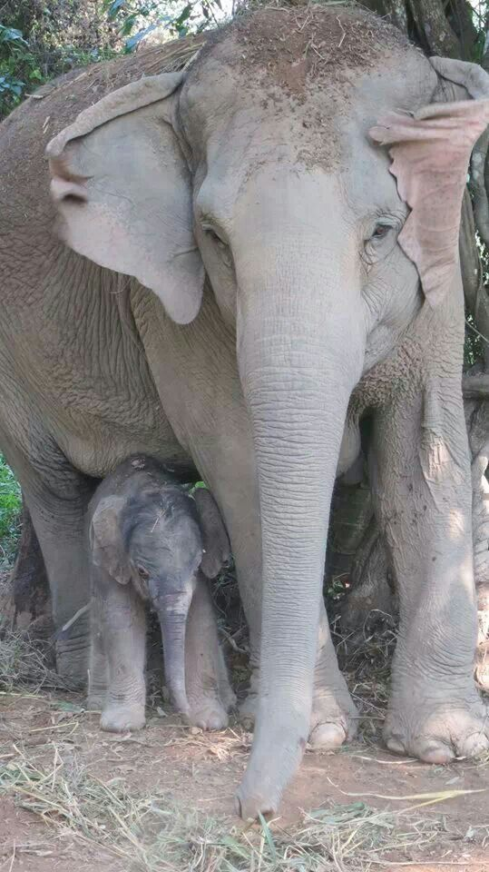baby elephant just arrived in the world