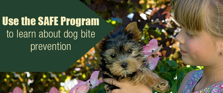Do you know about the SAFE program to help prevent dog bites? https://www.sitstay.com/blogs/good-dog-blog/use-the-safe-program-to-learn-about-dog-bite-prevention-1?utm_campaign=coschedule&utm_source=pinterest&utm_medium=SitStay%20Dogs&utm_content=Use%20the%20SAFE%20Program%20to%20learn%20about%20dog%20bite%20prevention