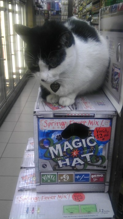 """""""If human, a cat might play Solitaire.  He would not get together would a group his buddies, share a six pack, and watch Monday Night Football."""" --Time Magazine"""
