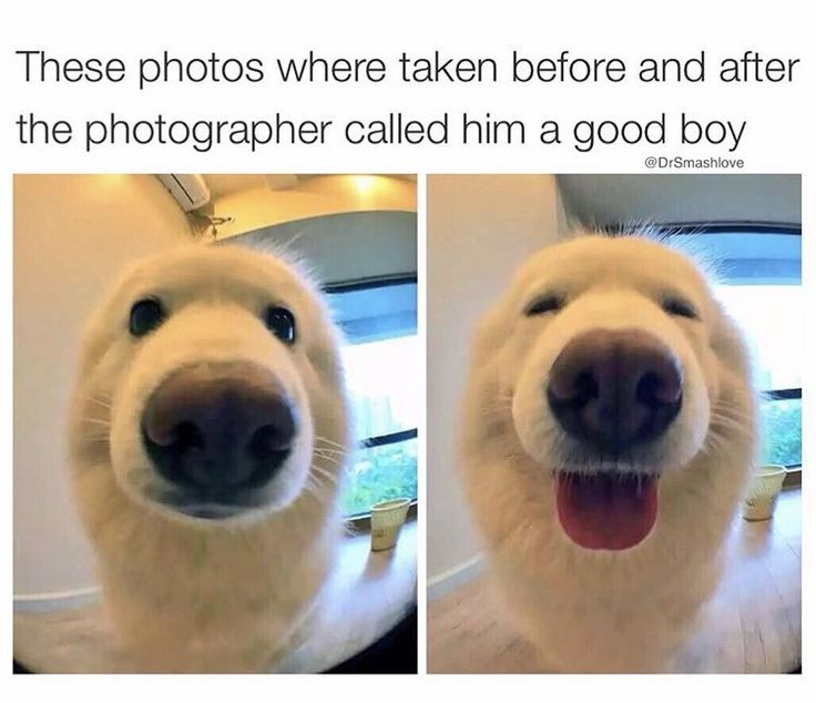 What a good boy!