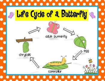 plant life cycle diagram for kids worksheet