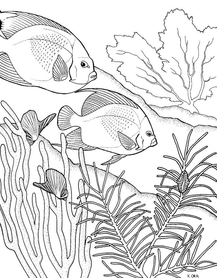2834 best COLORING PAGES images on Pinterest Coloring books - best of under the sea coral coloring pages