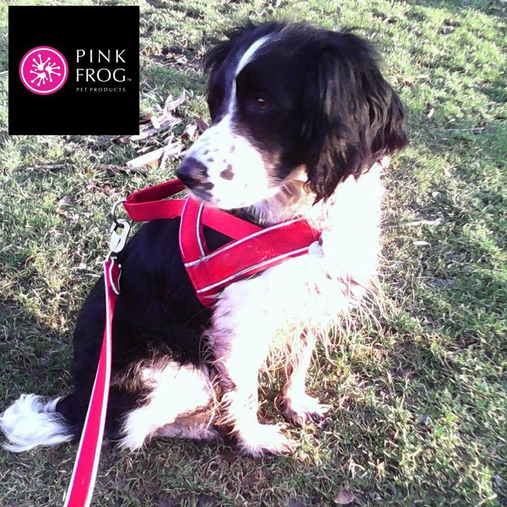Canadian based Pink Frog Pet Products fun, functional and fashionable accessories for dogs. Reasonable domestic + International shipping rates.