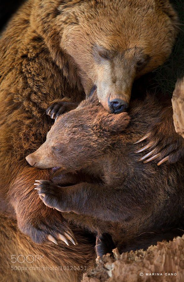 Photograph Cuddle by Marina Cano on 500px