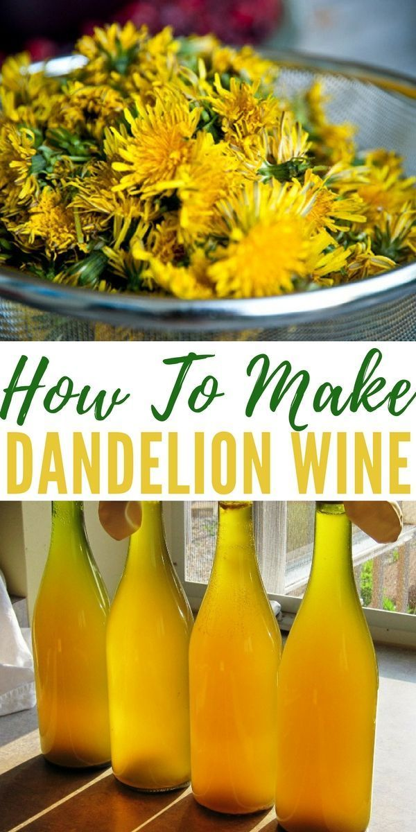 How To Make Dandelion Wine Shtfpreparedness Dandelion Recipes Dandelion Wine Homemade Wine Recipes