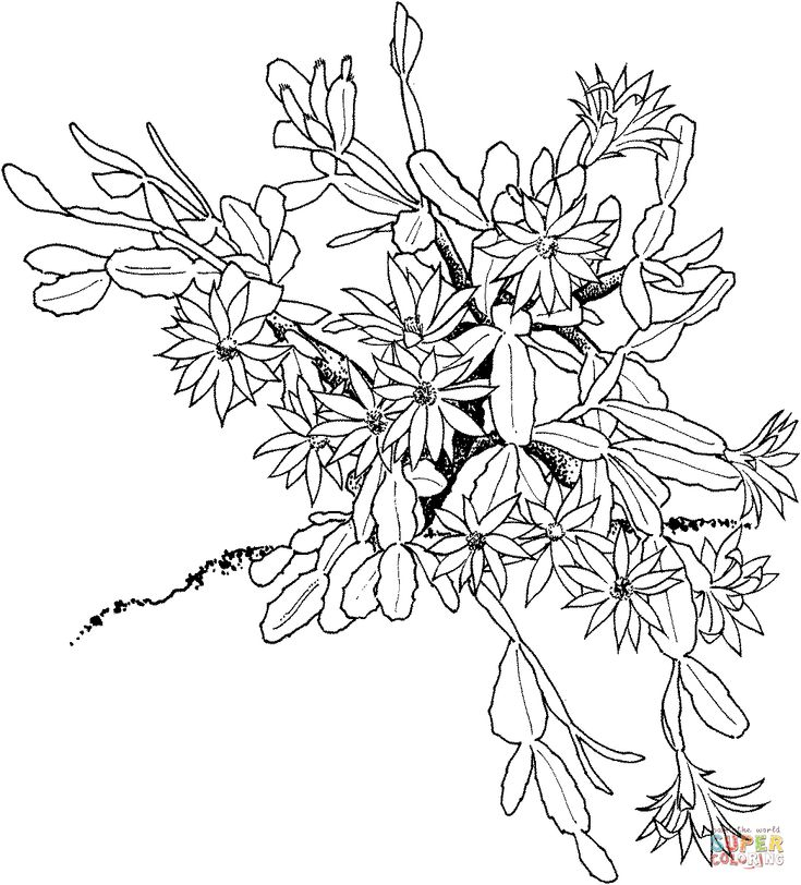 coloring pages of christmas flowers - photo#25