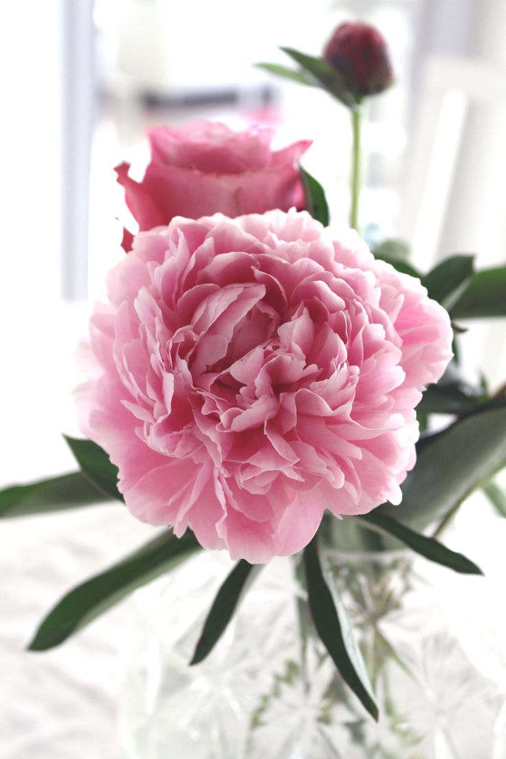 Love peonies ettrottmonogram.blogspot.se