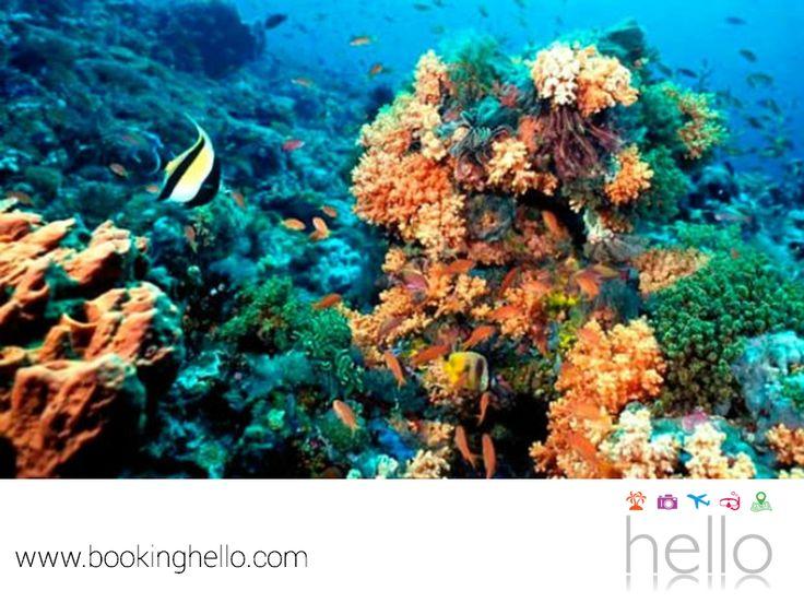 VIAJES EN PAREJA. Uno de los tesoros invaluables del Caribe mexicano es el Gran Arrecife Maya, el segundo más largo del mundo. Un lugar donde tú y tu pareja, podrán hacer snorkeling y asombrarse con su belleza. Es importante que sigas las recomendaciones de los guías, para cuidar el entorno y preservarlo. En Booking Hello, te invitamos a conocer nuestros packs all inclusive y elegir alguno de los resorts Catalonia de la zona, para relajarse después de un gran día de aventura…