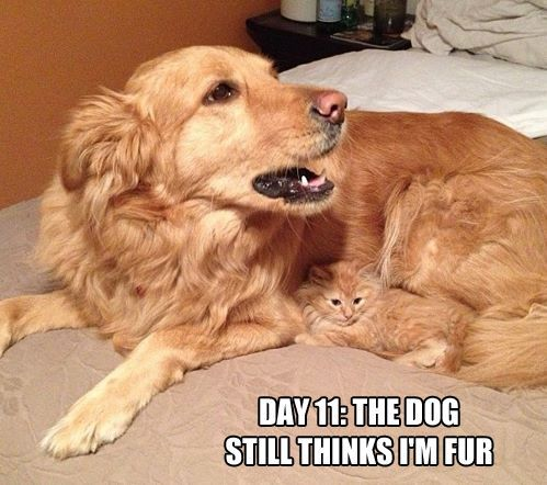 Day 11: The dog still thinks I'm fur.
