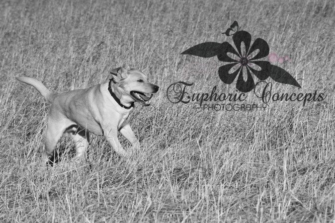 Pet and Rescue Photographer Kingston   https://www.facebook.com/EuphoricConcepts