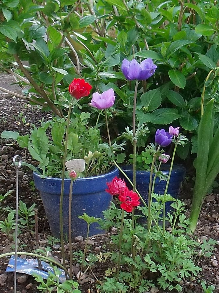 Après des jours gris le jardin offre à nouveau ses couleursEt aujourd'hui sera encore une belle journée Bonheur