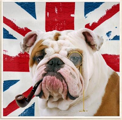 18 Best Bulldog Images On Pinterest British Bulldog