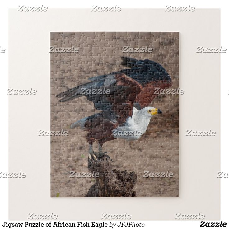 Jigsaw Puzzle of African Fish Eagle